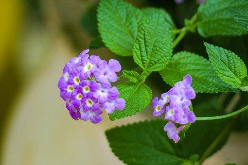 Nature, Flower, Plant, Garden, Leaf, Petal, Light