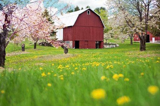 Red Barn, Spring, Flowering Trees, Dandelions, Rural