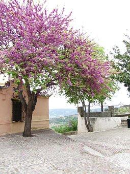 Spain, Tree, Street, Travel, Landscape