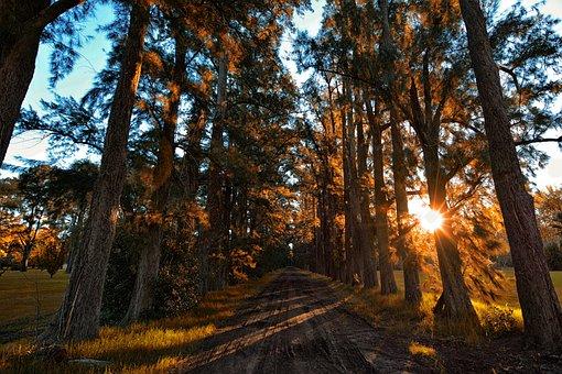 Landscape, Autumn, Forest, Nature, Trees