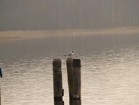 Bird, Lake, Water Bird