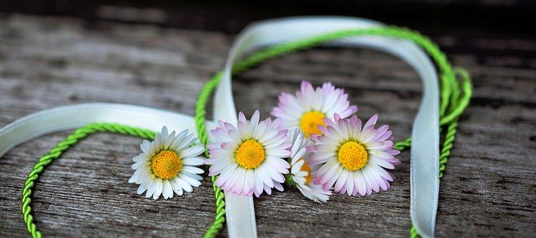 Daisy, Flowers, Flower, White, Spring, Lawn Flower