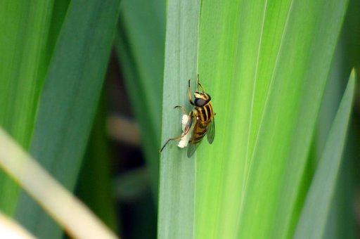 Nature, Insect, Wasp, Green, Animal