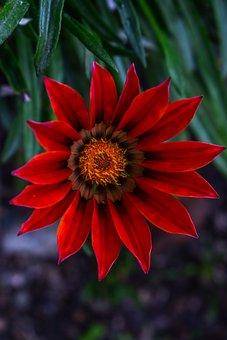 Beautiful Flower, Nature, Petals Beautiful