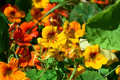Flowers, Orange, Yellow, Beautiful, Leaves, Nature