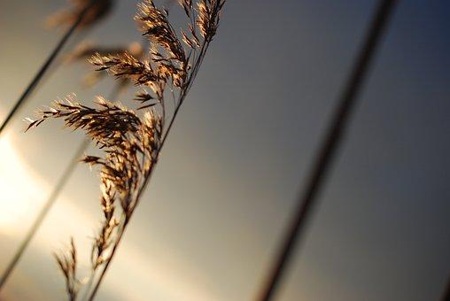 Nature, Bokeh, Netherlands, Summer, Bright, Blur