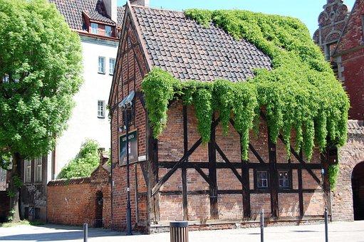 Gdańsk, Building, Ivy