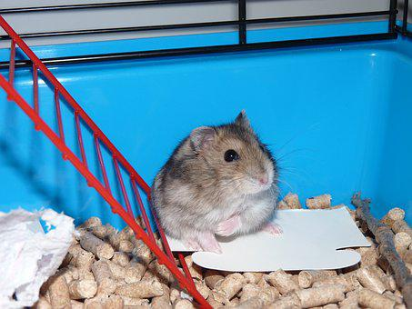 Hamster, Cage, Cute, Animal, Pet, Funny, Little, Young