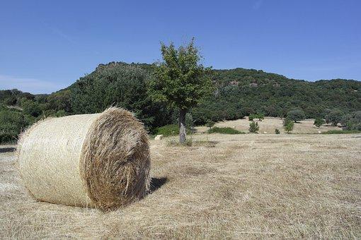 Field, Crops