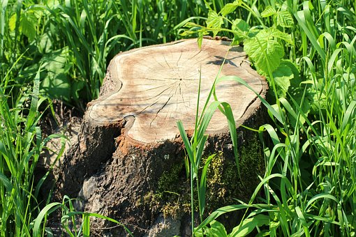 Trunk, Cut Down A Tree, Tree, Sawn Timber, Tree Trunks