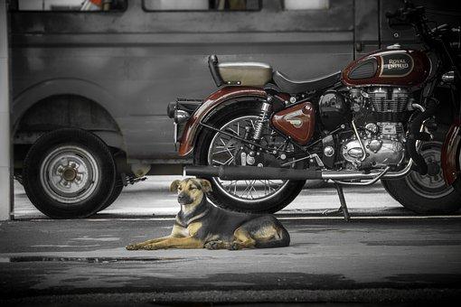 Bike, Royal Enfield, Dog