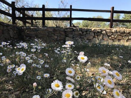 Wildflowers, Fence, Meadow, Field, Green, Spring