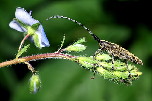 Insect, Plant, Macro, Flower, Closeup
