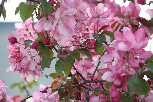 Pink, Flower, Pink Flowers, Flowering, Petals