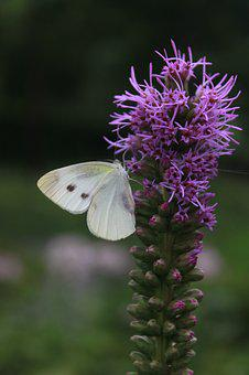 Flowers, Butterfly, Nature, Insects, Plants, Wildflower