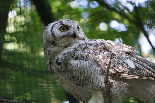 Owl, Zoo, Forest Animal, Bird, Nature, Animals
