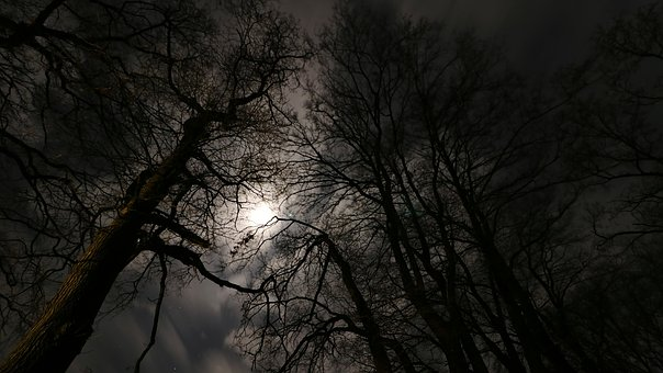 Moonlight, Forest, Night, Background, Full Moon, Mood