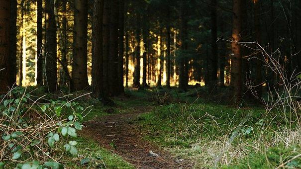Forest Path, Forest, Weird, Glade, Predator, Green