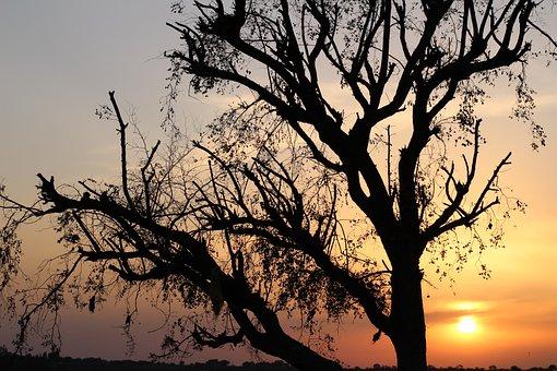Sunset, Golden Hour, Silhouette, Nature, Sun