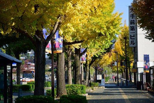 Autumn, Tree, Japan, Forest, Leaves, Autumnal, November