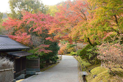 Autumn, Tree, Japan, Red, Forest, Leaves, Autumnal
