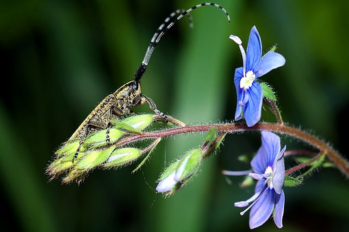 Insect, Flowers, Macro