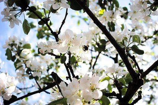 Nature, Tree, Blossom, Green, Sunlight, White, Growth