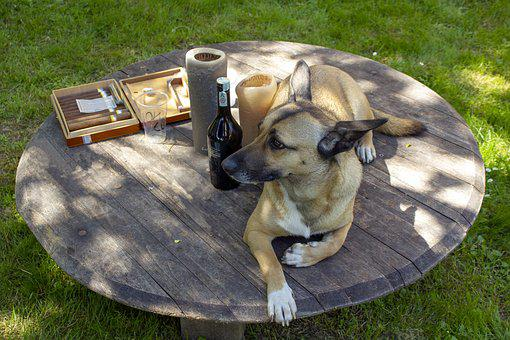 Dog, Feast, Relaxation, Alcoholism, Garden, Celebrate
