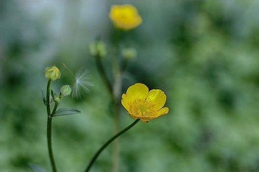 Flower, Spring Flower, Nature, Spring