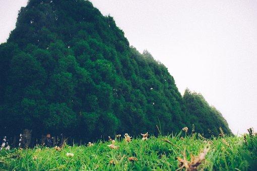 Smit, Shillong, Tree