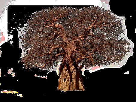 Tree, Baobab, Aesthetic, Tribe, Adansonia, African Tree