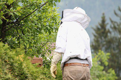 Beekeeper, Bee Keeping, Beekeeping, Bee-keeping