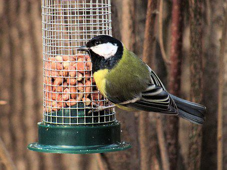 Bird, Chickadee, Bird Feeding Tray, Park