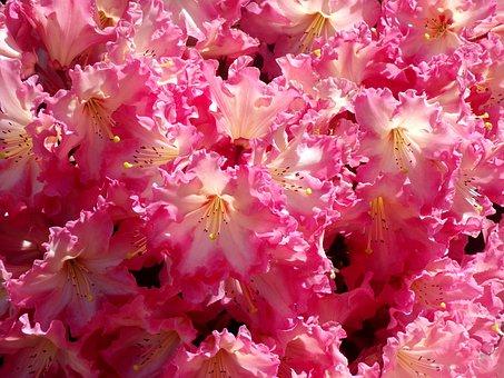 Flowers, Sun, Garden, Nature, Botany, Landscapes