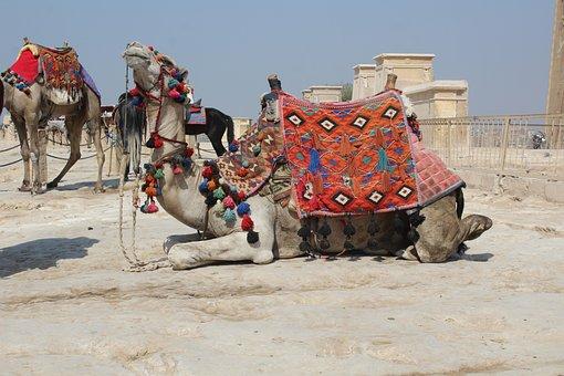 Camel, Khufu, Pyramid, Ancient, Giza, Egypt, Cairo