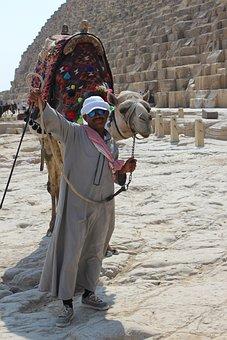 Camel, Gamal, Desert, Egyptian Camel, Egypt, Shara