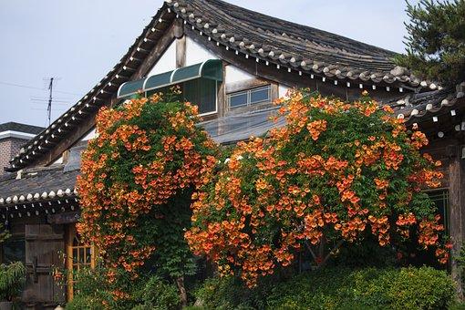 Campsis, Hanok, Flowers, Traditional Building