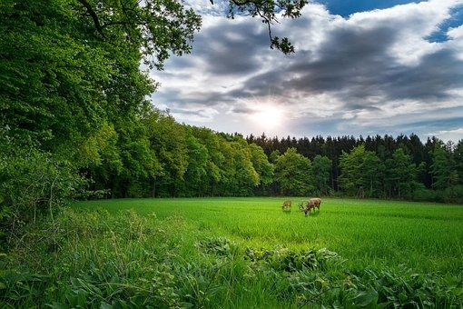 Landscape, Nature, Landscape Nature, Forest