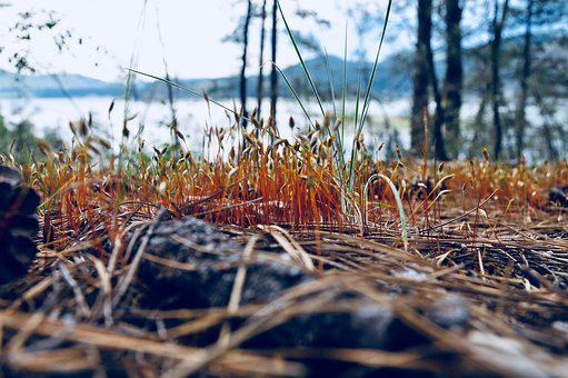 Nature, Close, Forest Floor, Plant, Seedlings, Forest