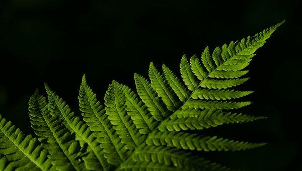 Landscape, Nature, Fern, Leaf, Sun