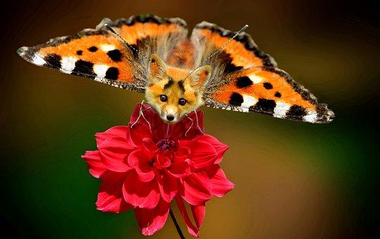 Digiart, Photoshop, Little Fox, Butterfly, Animal