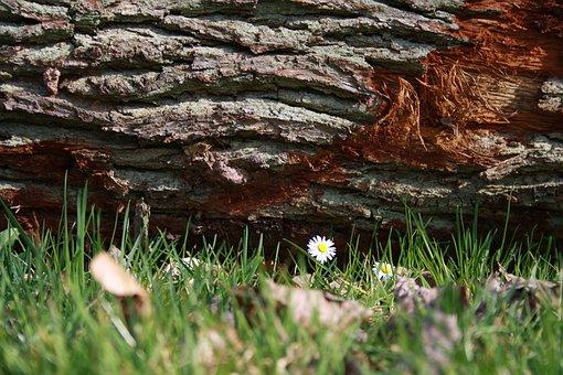 Log, Daisy, Nature, Wood, Rush, Meadow, Leaves, Autumn