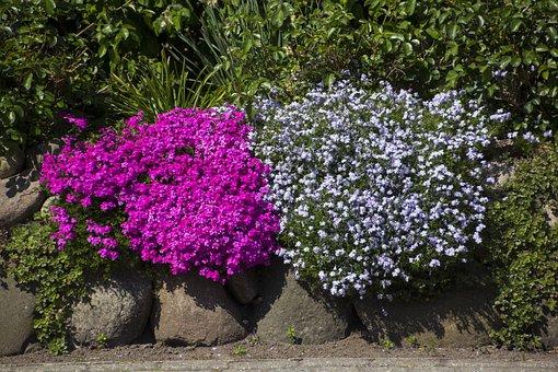 Flower, Nature, Beautiful Flower, Flowers, Plant