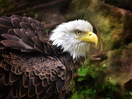 Eagle, Birds, Emblem, Nature, Raptors, Wildlife, Symbol