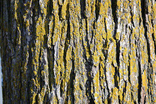 Tree, Texture, Natural, Wood, Forest, Pattern
