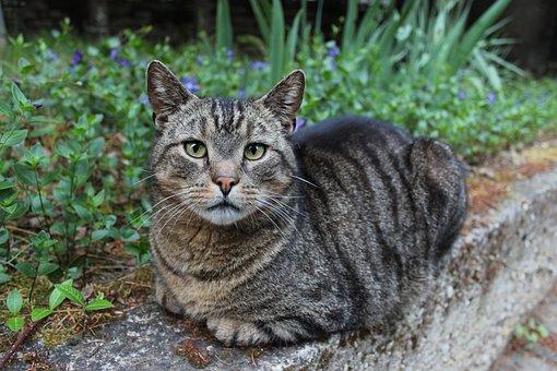 Cat, Domestic Cat, Mieze, Pet, Mackerel, Garden