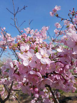 Spring, Flowers, Wood, Pink, Nature, Landscape, Plants