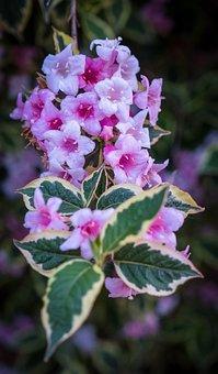 Flowers, Pink, White, Spring, Bush, Tree, Green, Summer