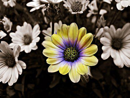 Flowers, Spring, Flower, Nature, The Delicacy, Plant
