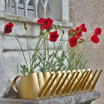 Poppy, Watering Can, Window, Blossom, Bloom, Red